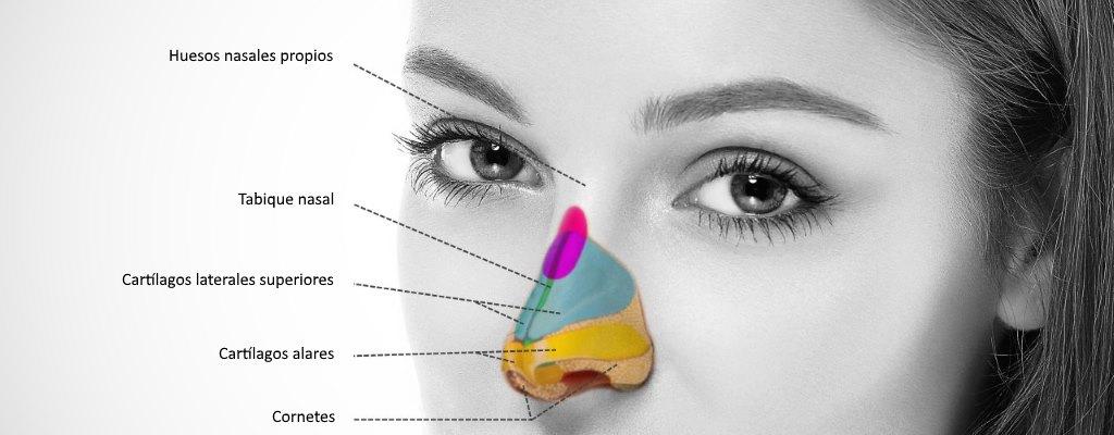 morfología nariz
